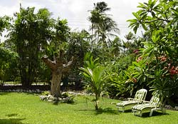 Garden at Mangoes self-catering villa in Barbados in the Caribbean